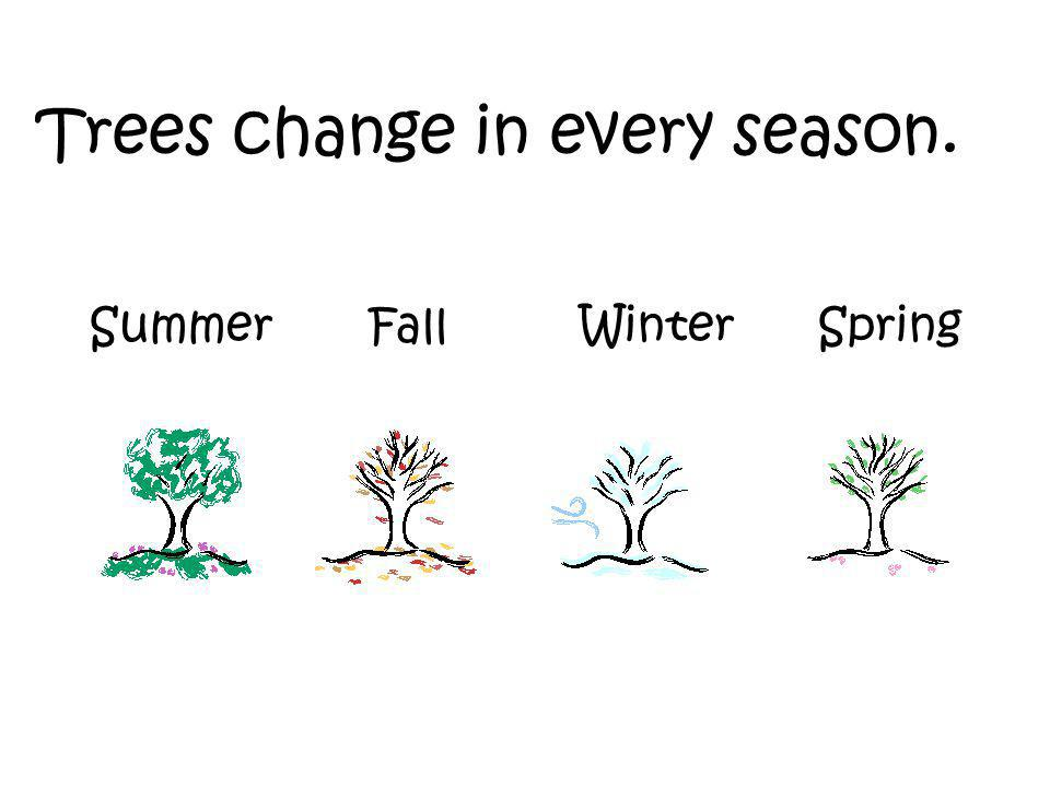 Trees change in every season. Summer Fall Winter Spring