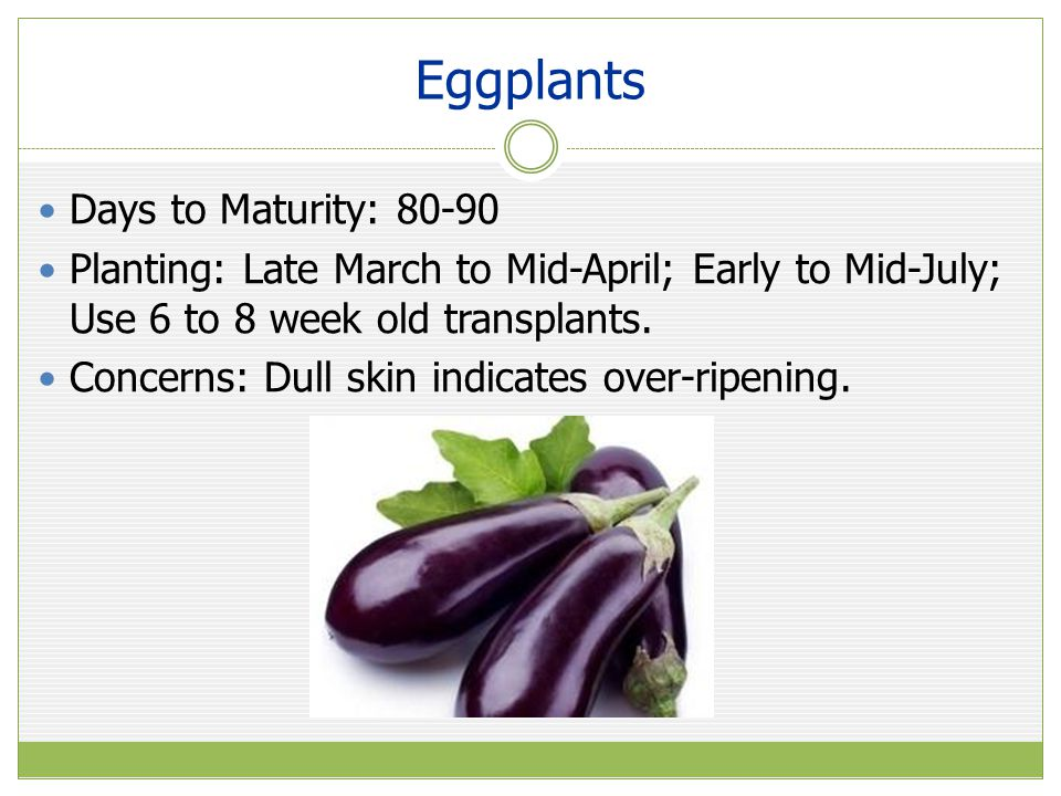 Eggplants Days to Maturity: 80-90 Planting: Late March to Mid-April; Early to Mid-July; Use 6 to 8 week old transplants.