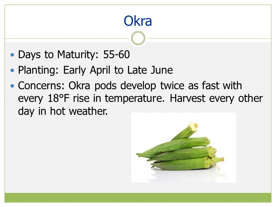 Okra Days to Maturity: 55-60 Planting: Early April to Late June Concerns: Okra pods develop twice as fast with every 18°F rise in temperature.
