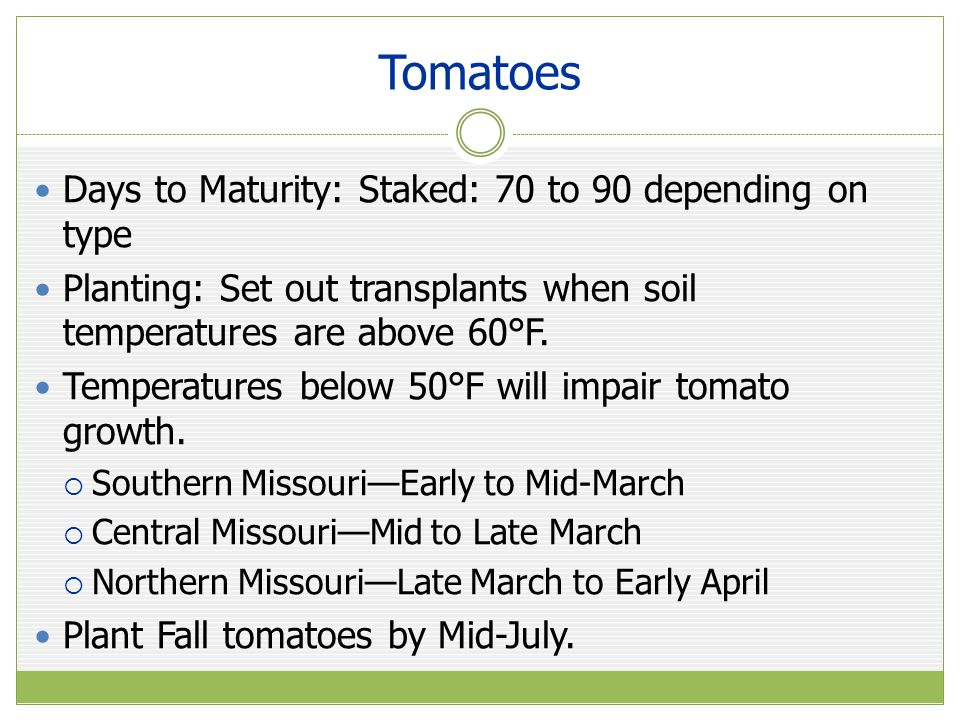 Tomatoes Days to Maturity: Staked: 70 to 90 depending on type Planting: Set out transplants when soil temperatures are above 60°F.