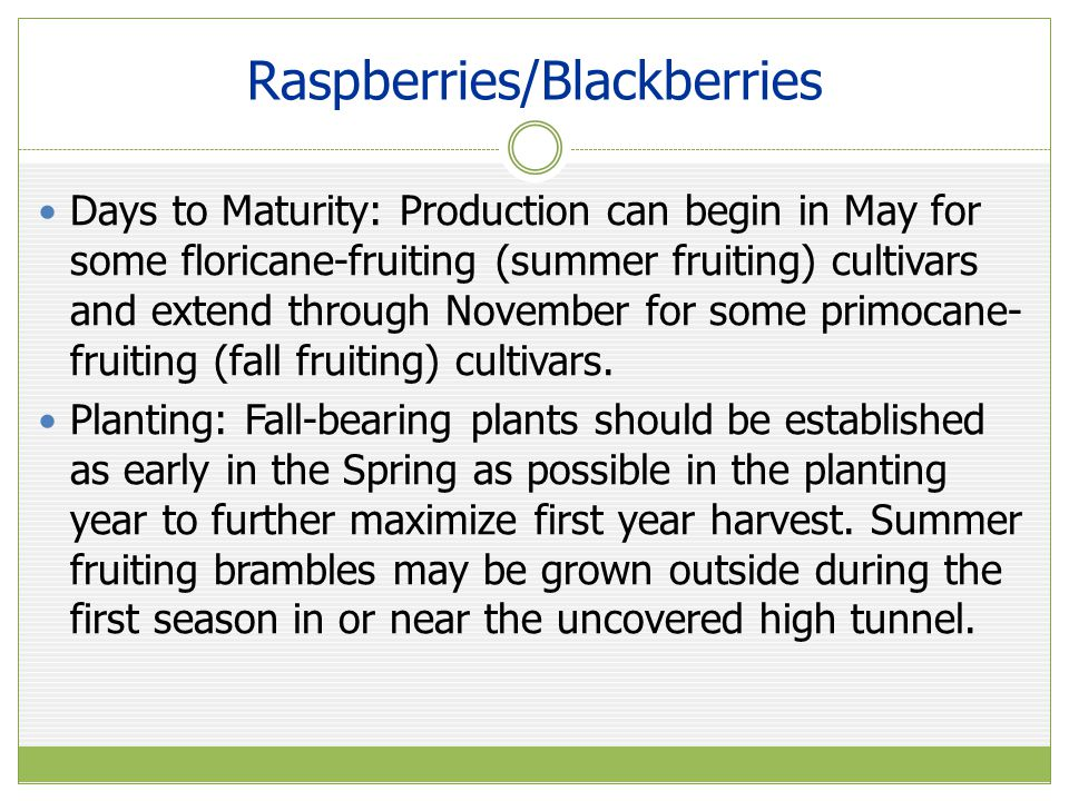 Raspberries/Blackberries Days to Maturity: Production can begin in May for some floricane-fruiting (summer fruiting) cultivars and extend through November for some primocane- fruiting (fall fruiting) cultivars.