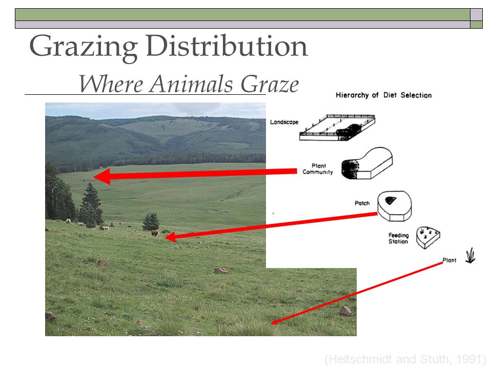 (Heitschmidt and Stuth, 1991) Grazing Distribution Where Animals Graze