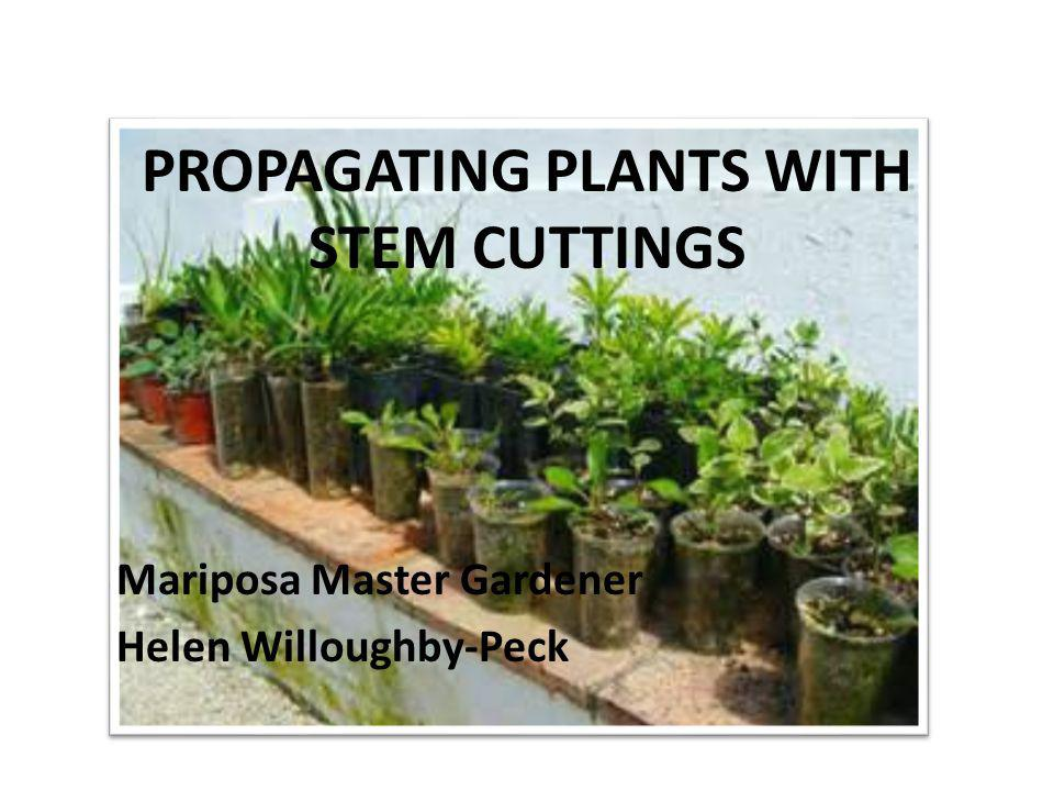PROPAGATING PLANTS WITH STEM CUTTINGS Mariposa Master Gardener Helen Willoughby-Peck