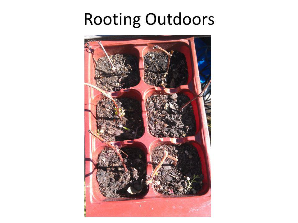 Rooting Outdoors