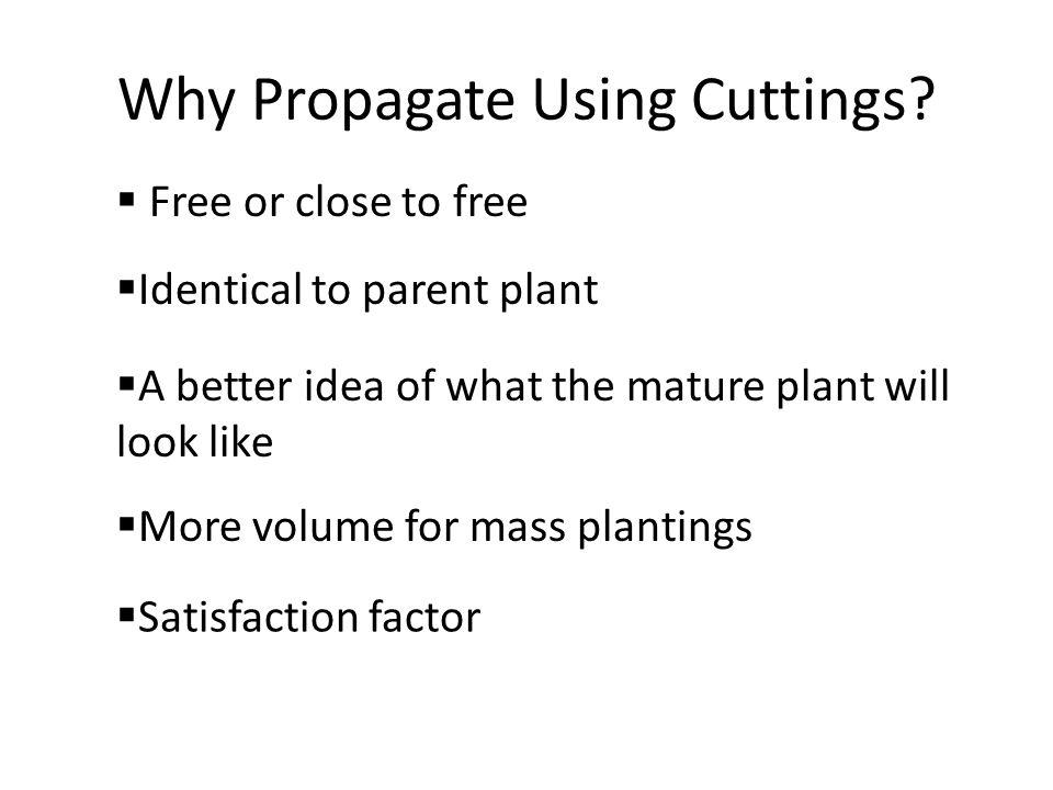 Why Propagate Using Cuttings.