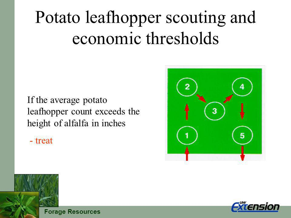Forage Resources Potato leafhopper scouting and economic thresholds If the average potato leafhopper count exceeds the height of alfalfa in inches - treat