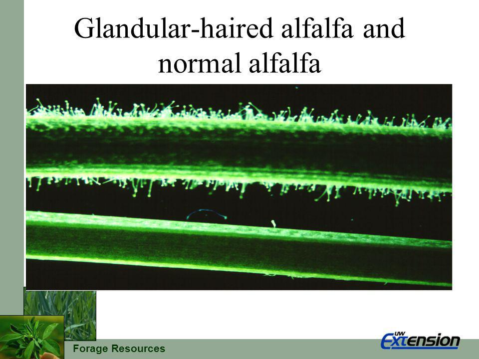 Forage Resources Glandular-haired alfalfa and normal alfalfa