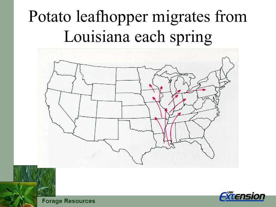 Forage Resources Potato leafhopper migrates from Louisiana each spring