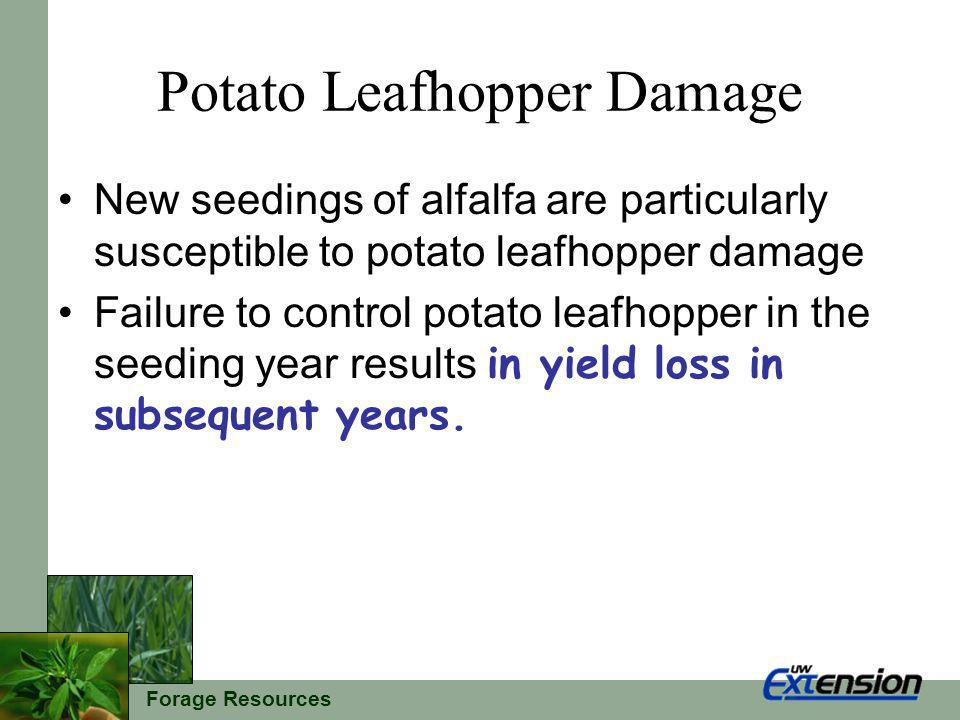 Forage Resources Potato Leafhopper Damage New seedings of alfalfa are particularly susceptible to potato leafhopper damage Failure to control potato leafhopper in the seeding year results in yield loss in subsequent years.