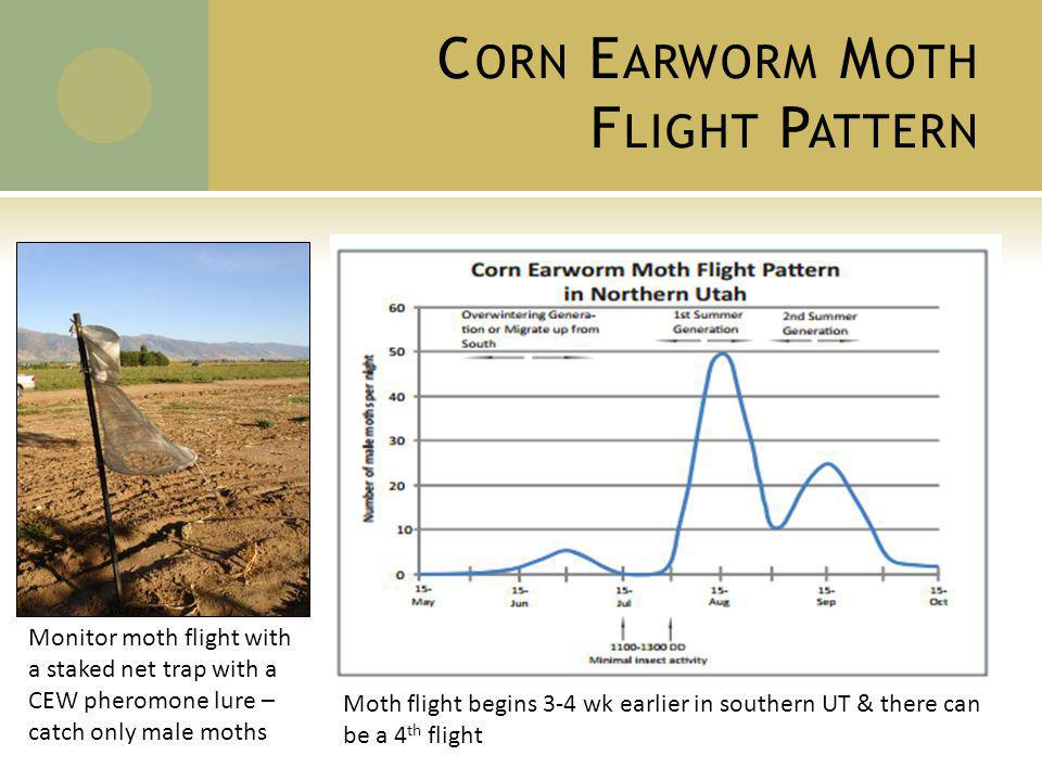 C ORN E ARWORM M OTH F LIGHT P ATTERN Moth flight begins 3-4 wk earlier in southern UT & there can be a 4 th flight Monitor moth flight with a staked net trap with a CEW pheromone lure – catch only male moths