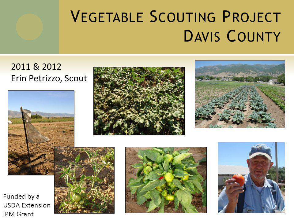 V EGETABLE S COUTING P ROJECT D AVIS C OUNTY 2011 & 2012 Erin Petrizzo, Scout Funded by a USDA Extension IPM Grant