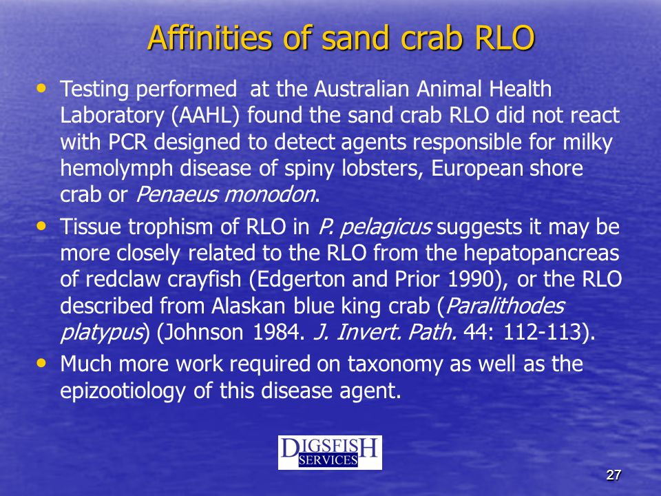 2727 Affinities of sand crab RLO Testing performed at the Australian Animal Health Laboratory (AAHL) found the sand crab RLO did not react with PCR designed to detect agents responsible for milky hemolymph disease of spiny lobsters, European shore crab or Penaeus monodon.