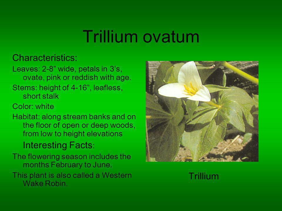 Trillium ovatum Characteristics: Leaves: 2-8 wide, petals in 3s, ovate, pink or reddish with age.