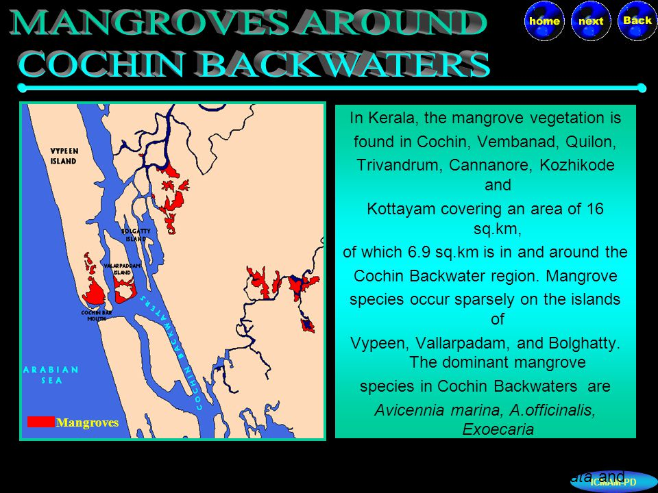 ICMAM-PD The molluscan fishery of the Cochin Backwaters is exclusively sustained by the black-clam Villorita cyprinoides.