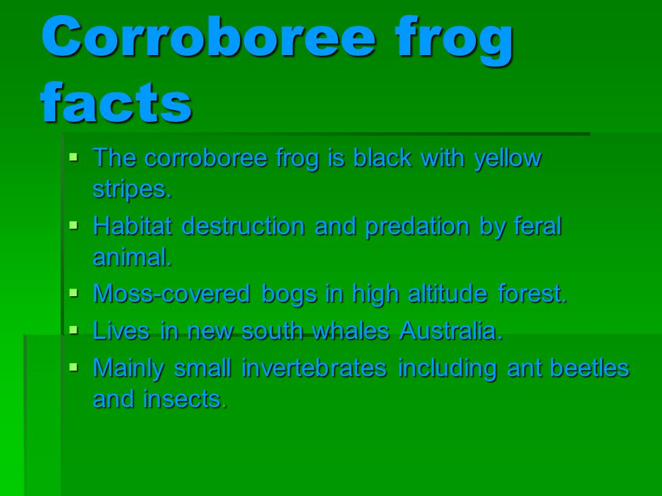 Corroboree frog facts The corroboree frog is black with yellow stripes.
