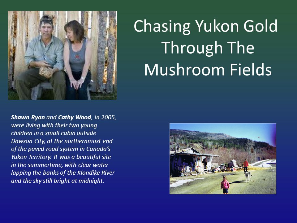 Chasing Yukon Gold Through The Mushroom Fields Shawn Ryan and Cathy Wood, in 2005, were living with their two young children in a small cabin outside Dawson City, at the northernmost end of the paved road system in Canadas Yukon Territory.