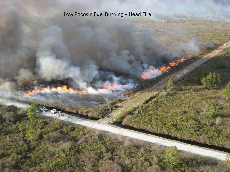 Low Pocosin Fuel Burning – Head Fire
