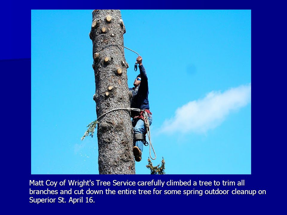 Matt Coy of Wright s Tree Service carefully climbed a tree to trim all branches and cut down the entire tree for some spring outdoor cleanup on Superior St.