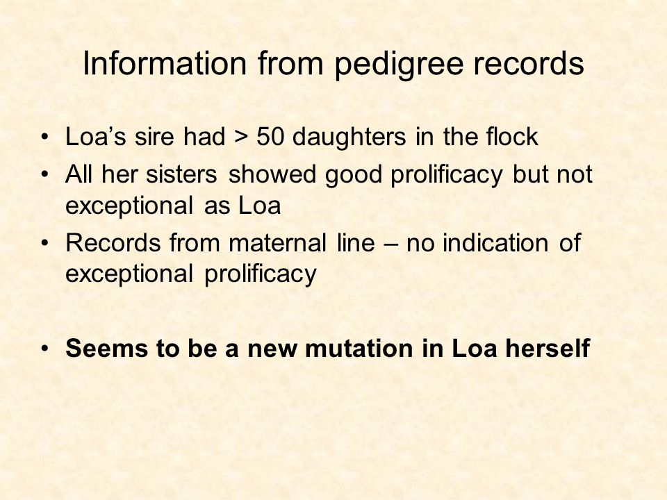 Information from pedigree records Loas sire had > 50 daughters in the flock All her sisters showed good prolificacy but not exceptional as Loa Records from maternal line – no indication of exceptional prolificacy Seems to be a new mutation in Loa herself