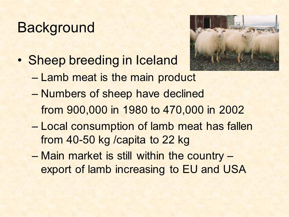 Background Sheep breeding in Iceland –Lamb meat is the main product –Numbers of sheep have declined from 900,000 in 1980 to 470,000 in 2002 –Local consumption of lamb meat has fallen from 40-50 kg /capita to 22 kg –Main market is still within the country – export of lamb increasing to EU and USA