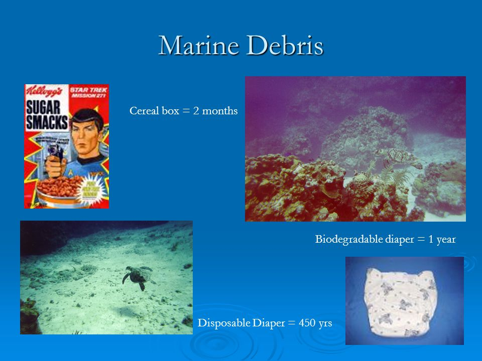 Marine Debris Cereal box = 2 months Biodegradable diaper = 1 year Disposable Diaper = 450 yrs