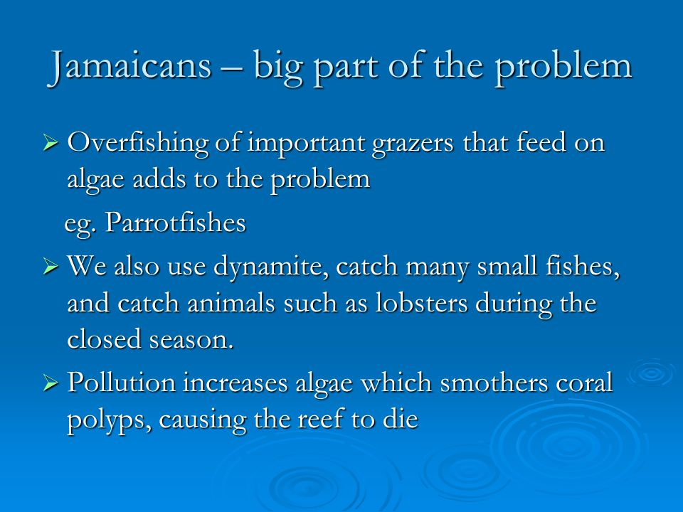 Jamaicans – big part of the problem Overfishing of important grazers that feed on algae adds to the problem Overfishing of important grazers that feed on algae adds to the problem eg.