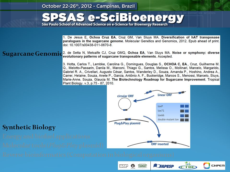 Sugarcane Genomics Synthetic Biology Energy and biofuel applications Molecular tools (Plug&Play plasmid) Reverse bioinformatics (Computation in biological organisms)