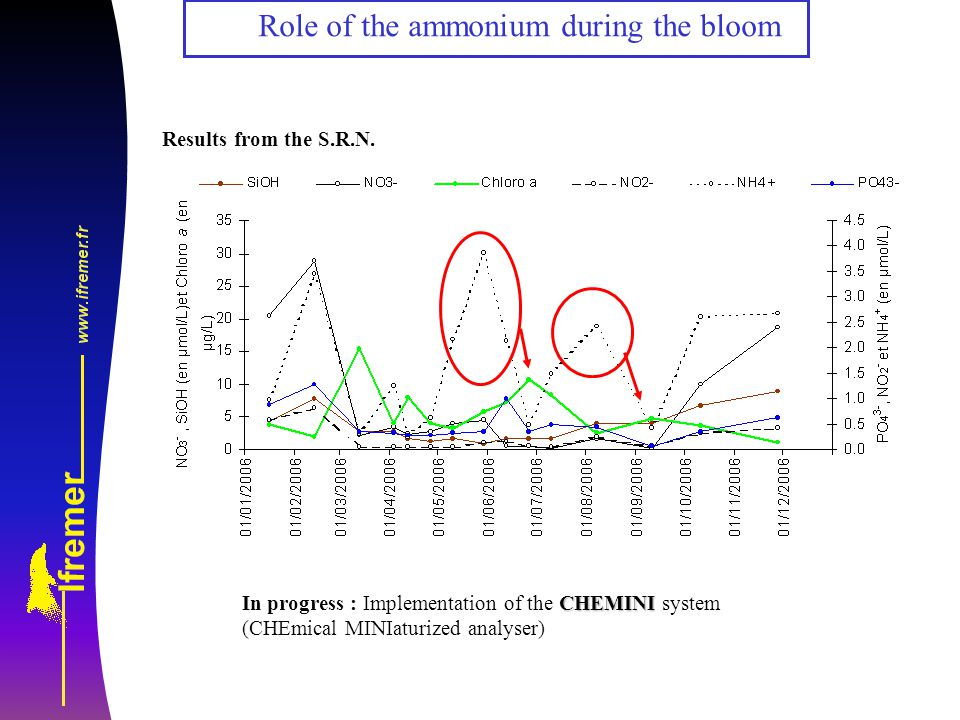 Role of the ammonium during the bloom Results from the S.R.N.