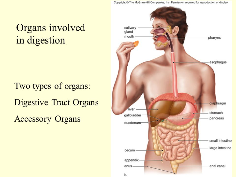 Digestive System Molecules Dna Molecules Atoms Organ Systems Cells