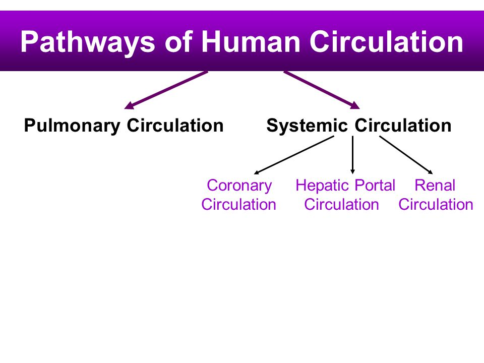 Pathways of Human Circulation Pulmonary Circulation Systemic Circulation Coronary Hepatic Portal Renal Circulation Circulation Circulation