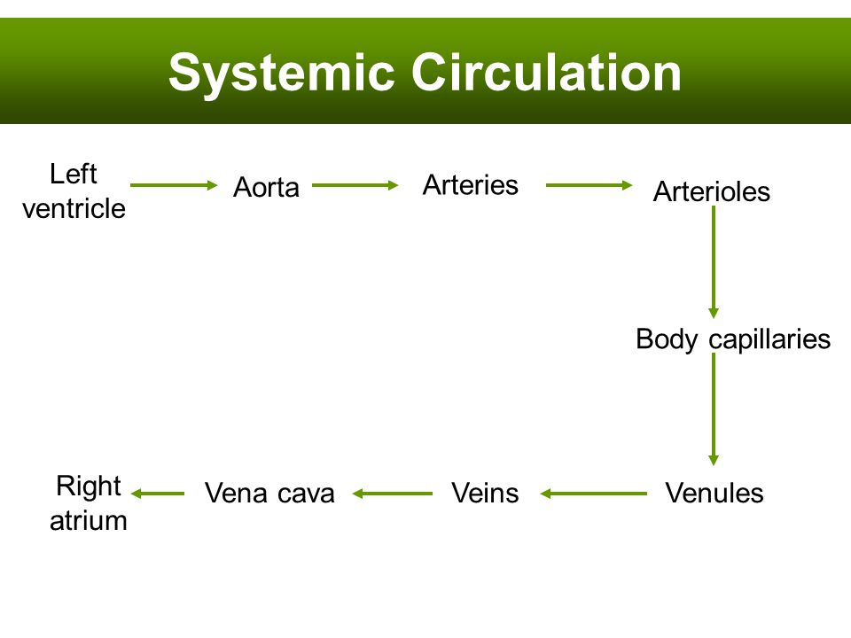 Systemic Circulation Left ventricle Arteries Aorta Arterioles Right atrium Vena cava Body capillaries VenulesVeins