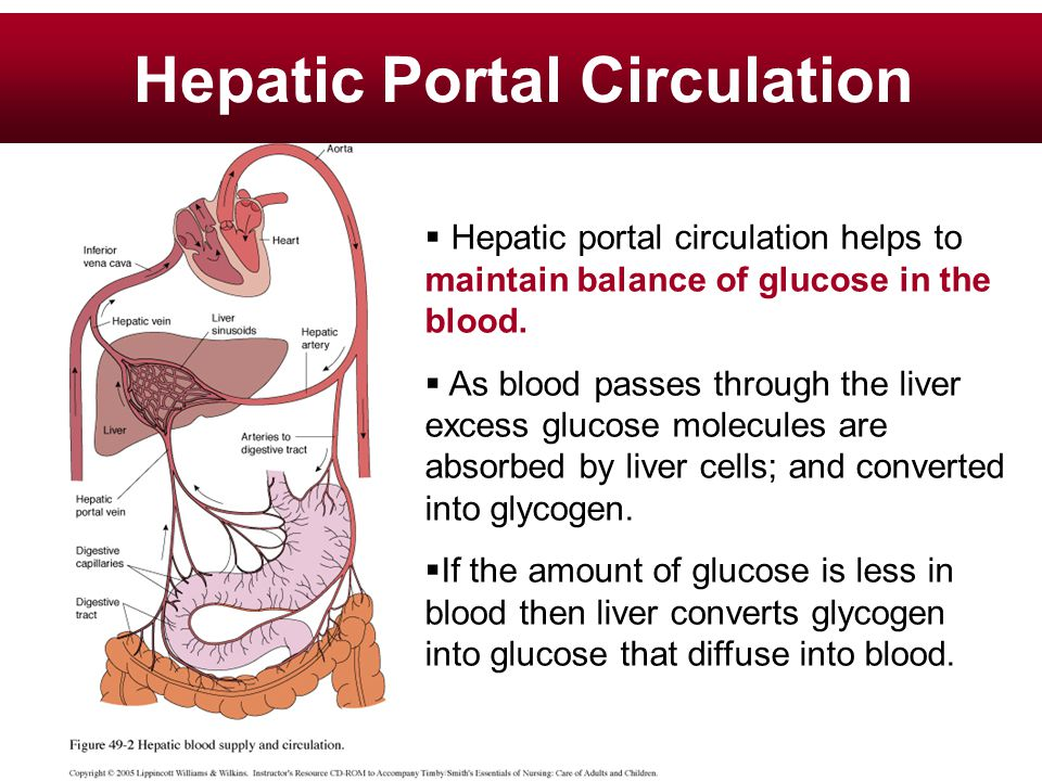 Hepatic Portal Circulation  Hepatic portal circulation helps to maintain balance of glucose in the blood.