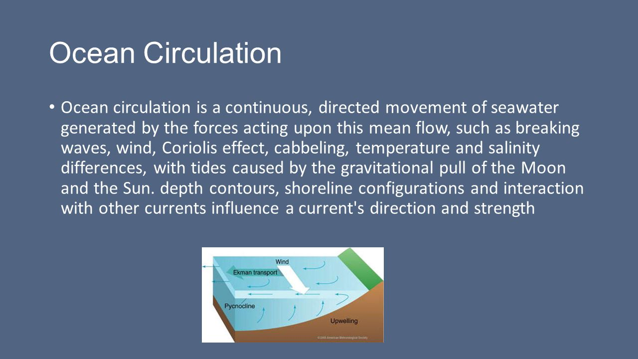 Ocean Circulation By: Samantha Hampton In Partnership With: Dr. Zafer Top