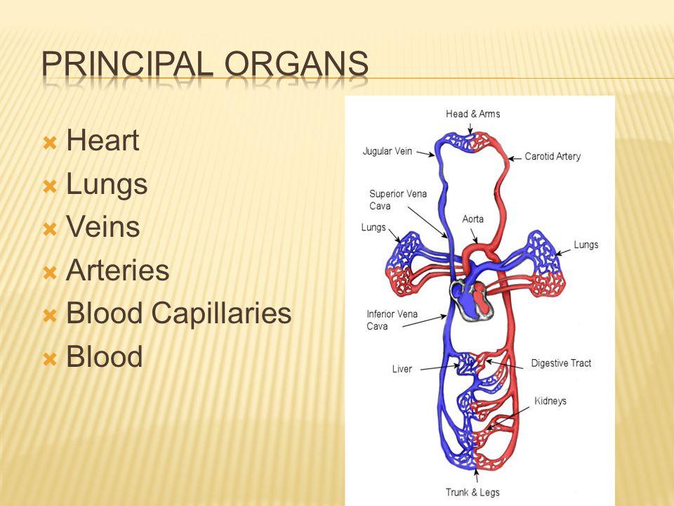 Lesson 03 Heart Lungs Veins Arteries Blood