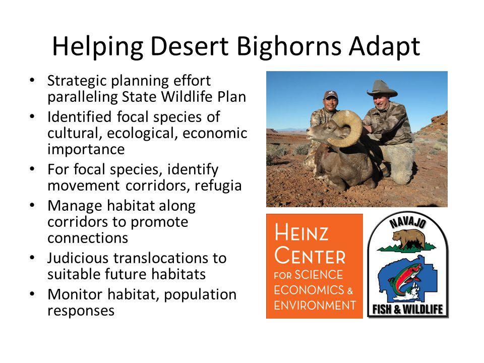 Strategic planning effort paralleling State Wildlife Plan Identified focal species of cultural, ecological, economic importance For focal species, identify movement corridors, refugia Manage habitat along corridors to promote connections Judicious translocations to suitable future habitats Monitor habitat, population responses Helping Desert Bighorns Adapt