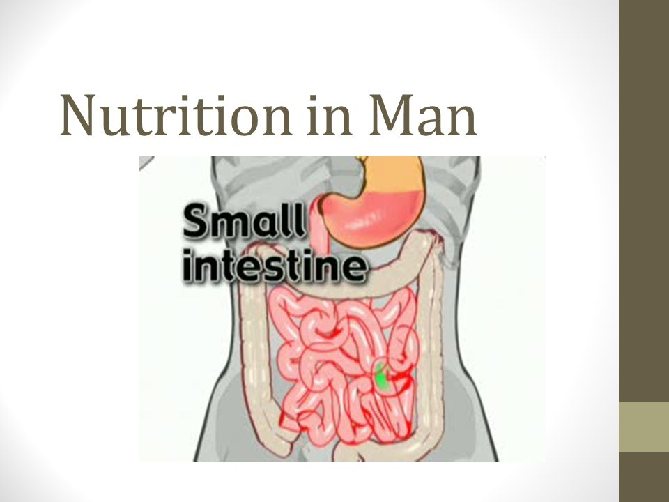 Nutrition In Man Lets Recap What Are The 3 Parts Of The Small