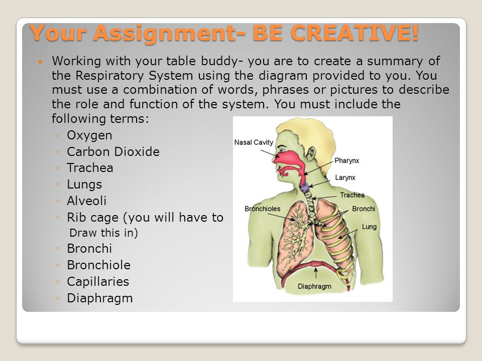 respiratory assignment With the activities in this teacher's guide, students will learn how the respiratory system works as well as what they can do to encourage good respiratory health keywords respiratory system, respiratory, lungs, lung, breathing, breathe, breath, breathes, asthma, oxygen, oxygenate.