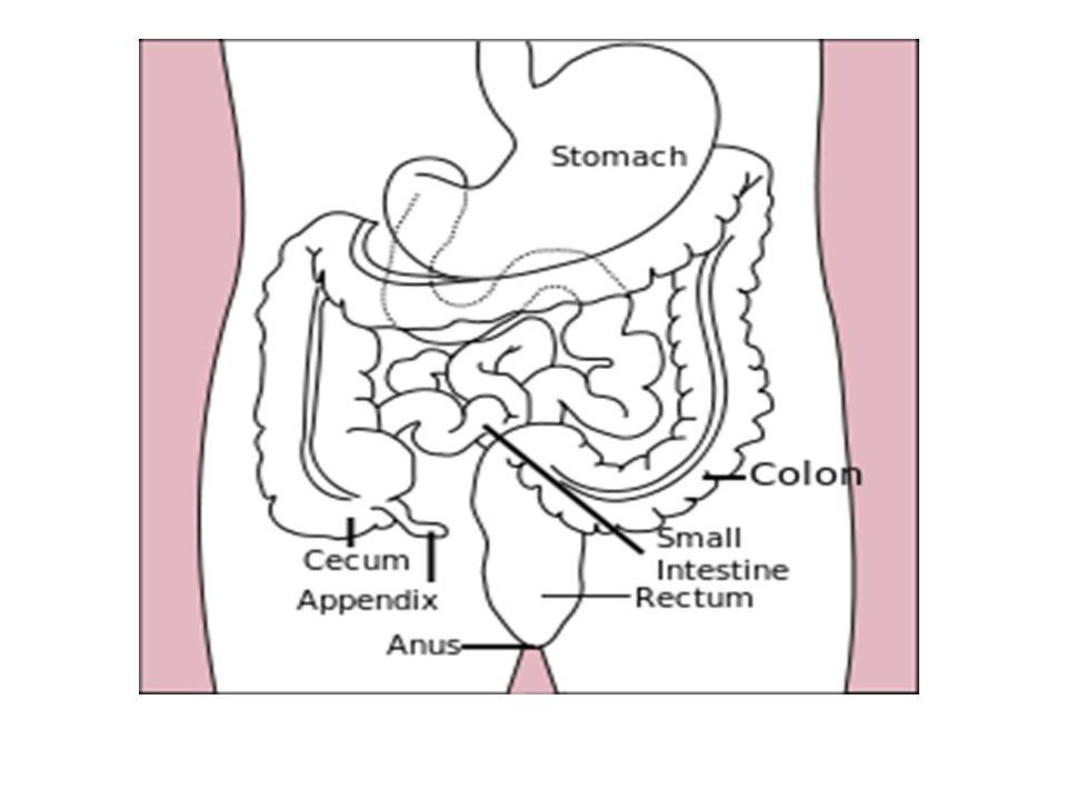 Large Intestine Ppt Video Online Download