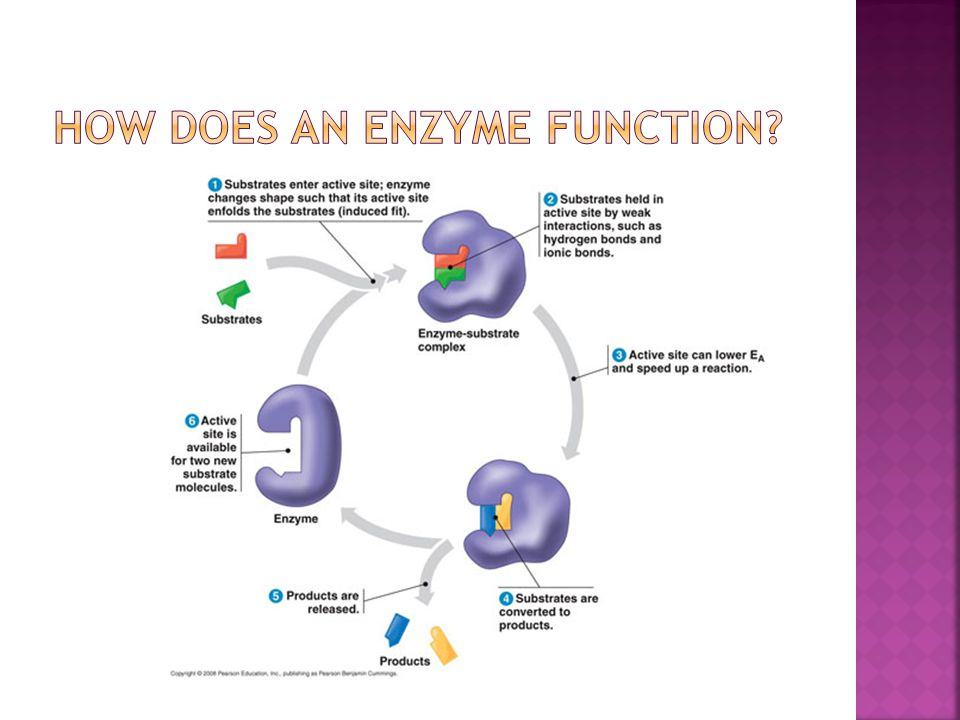 substrate Reactant(s) which binds to enzyme enzyme-substrate complex: temporary association product end result of reaction, what is produced active site enzyme's catalytic site; substrate fits into active site substrate enzyme products active site Enzyme- substrate complex
