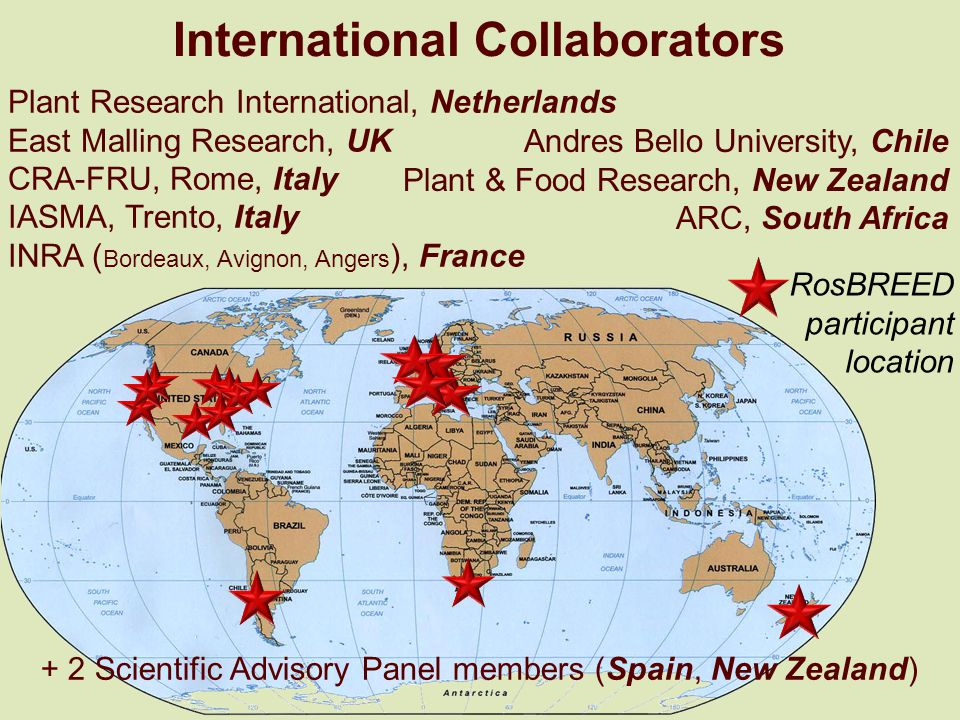 Plant Research International, Netherlands East Malling Research, UK CRA-FRU, Rome, Italy IASMA, Trento, Italy INRA ( Bordeaux, Avignon, Angers ), France Andres Bello University, Chile Plant & Food Research, New Zealand ARC, South Africa RosBREED participant location International Collaborators + 2 Scientific Advisory Panel members (Spain, New Zealand)
