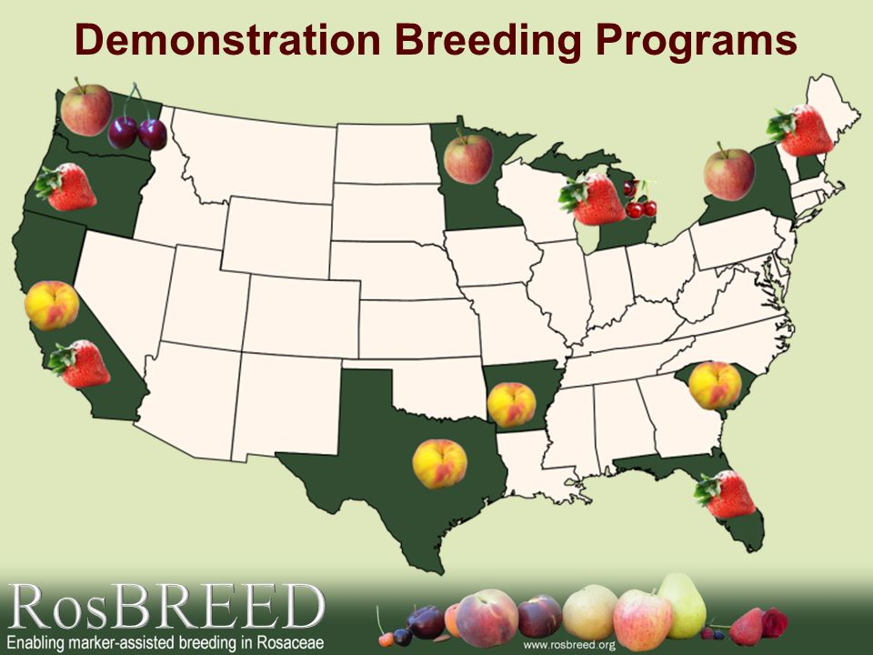 Demonstration Breeding Programs