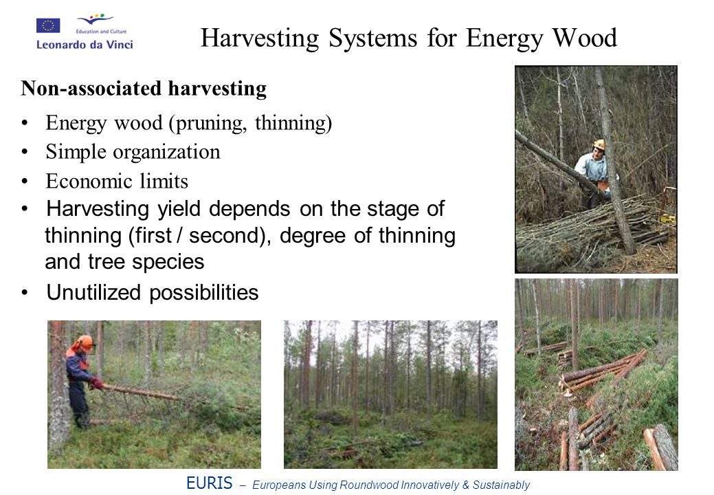 Harvesting Systems for Energy Wood EURIS – Europeans Using Roundwood Innovatively & Sustainably Non-associated harvesting Energy wood (pruning, thinning) Simple organization Economic limits Harvesting yield depends on the stage of thinning (first / second), degree of thinning and tree species Unutilized possibilities
