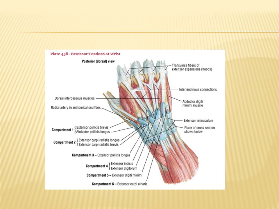 Imaging Anatomy of the Wrist - ppt video online download