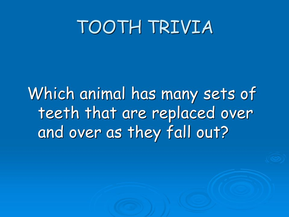 TOOTH TRIVIA Which animal has many sets of teeth that are replaced over and over as they fall out