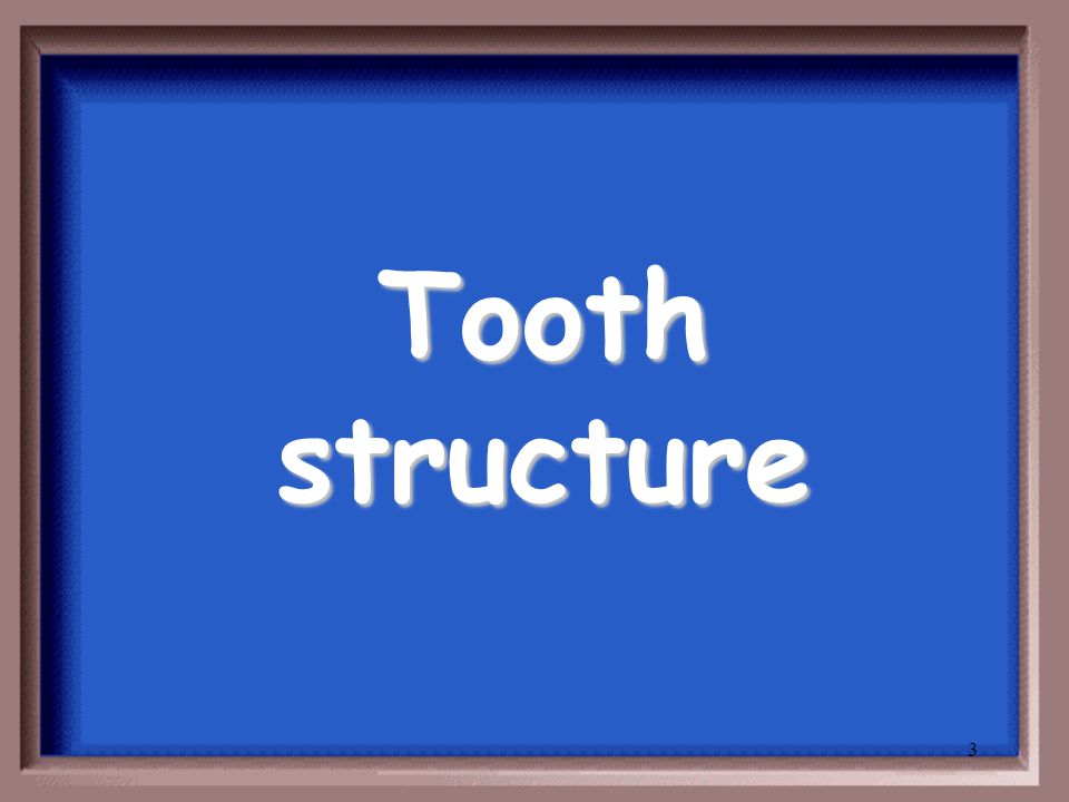 2 Teeth and Function
