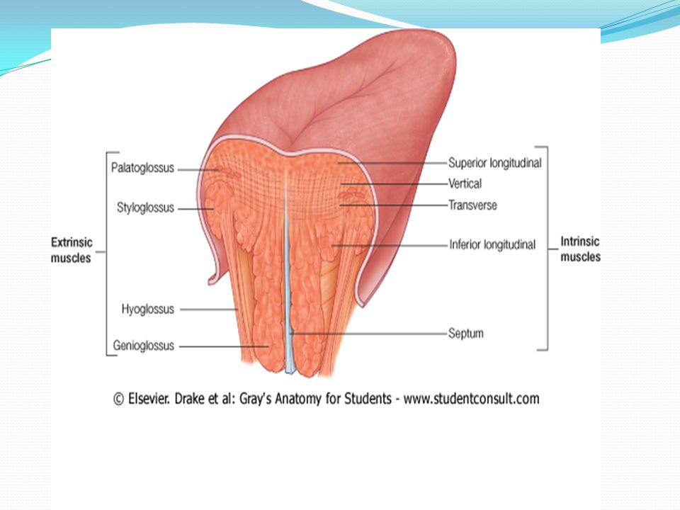 Oral Cavity Ppt Video Online Download