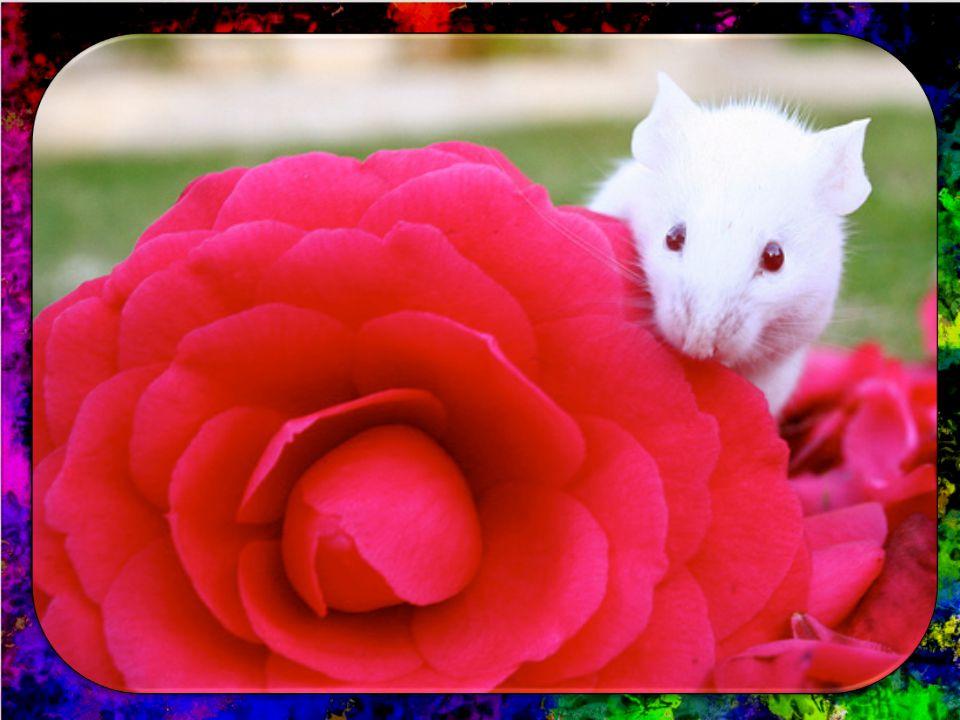 flowers for algernon miss kinnian