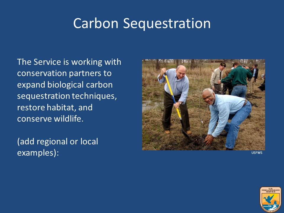 Carbon Sequestration The Service is working with conservation partners to expand biological carbon sequestration techniques, restore habitat, and conserve wildlife.