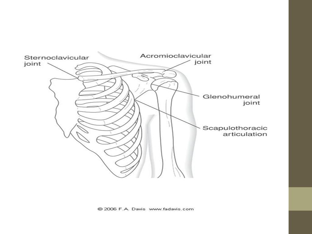 Shoulder Girdle-CH 9 Lenis J. Alicea-Yildirim PT, MEd Revision - ppt ...