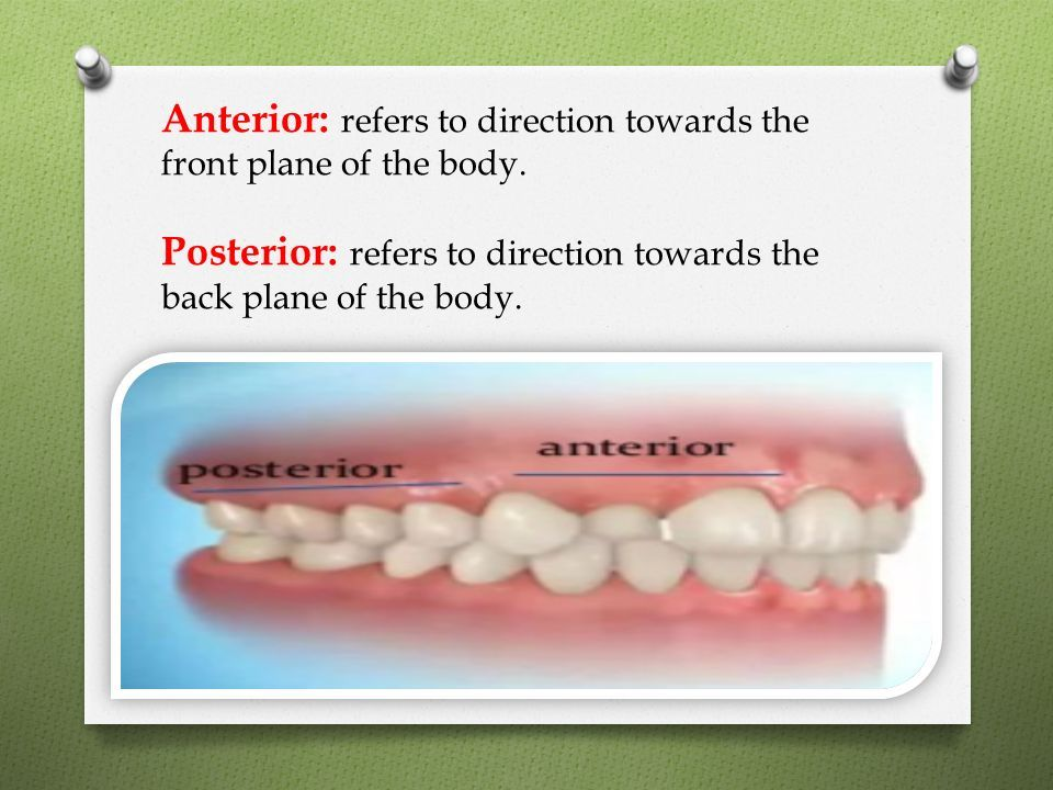 dental anatomy terminology - ppt download